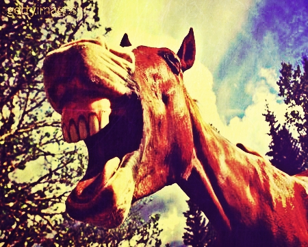 denti-cavallo