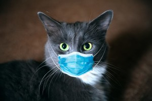 study-confirms-cats-can-become-infected-with-and-may-transmit-covid-19-to-other-cats